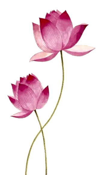 Decorative Lotus Flowers