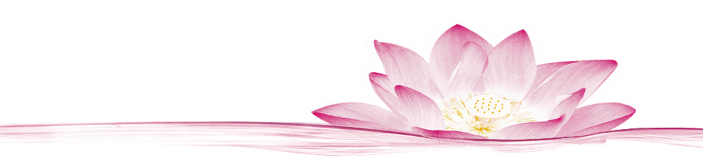 Pink Lotus Graphic