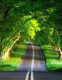 Beauty Nature Trail