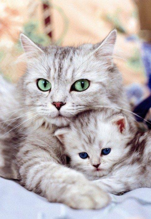 Cat with kitten