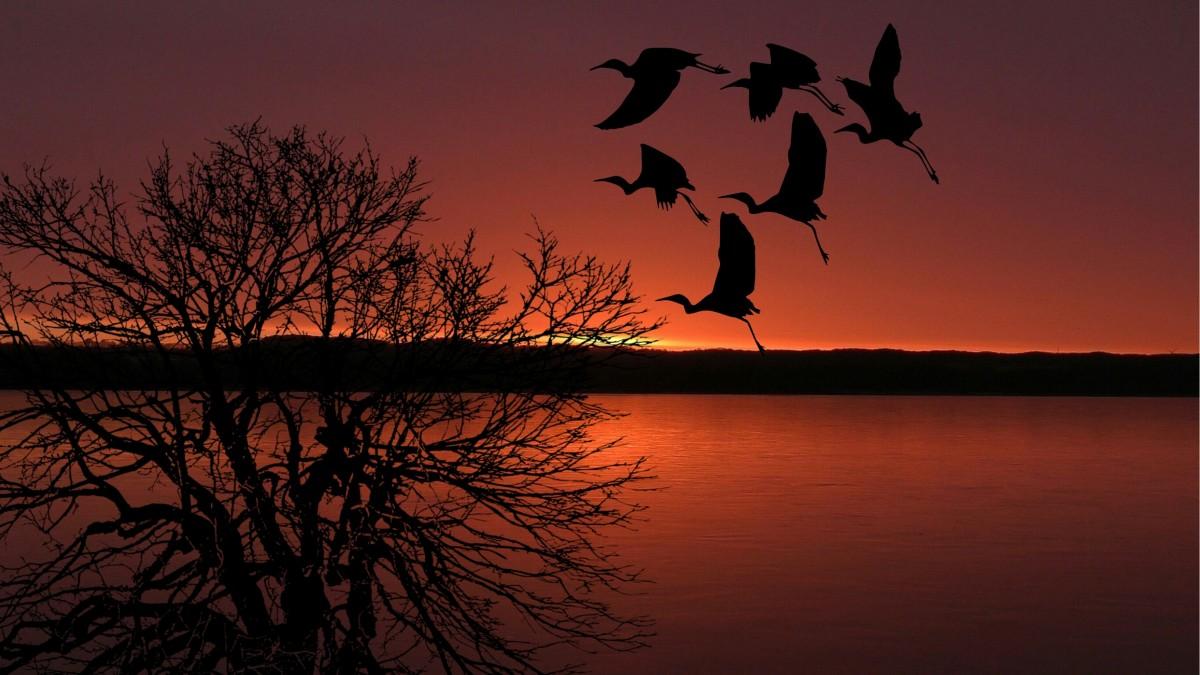 Flying Birds